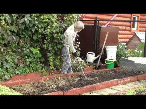 Оздоровление почвы на грядках – мой способ и отзывы о нем (Томская область)