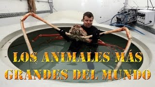 Los animales mas grandes del mundo | The bigest animals in the world