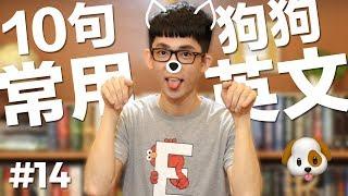 阿滴英文 10個常用的英文句子【狗狗篇】feat. 帕比