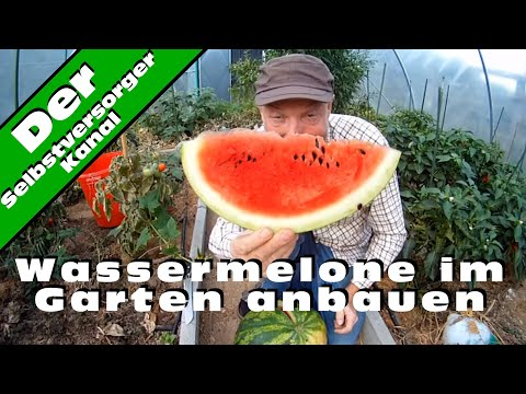 wassermelone im garten richtig anbauen youtube. Black Bedroom Furniture Sets. Home Design Ideas