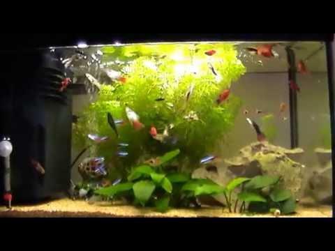 Acquari acqua dolce pesci tropicali youtube for Acquario acqua dolce