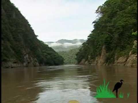 Selva amazonía Boliviana Parque Nacional Madidi