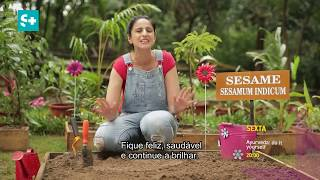 Canal S+ | Ayurveda: Do it yourself