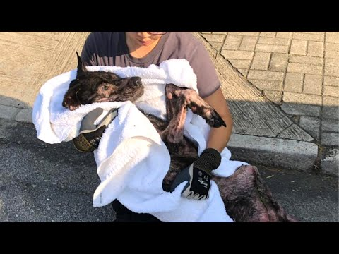 A Poor Sick Dog Rescued From Under an Abandoned House | Animal Shelter