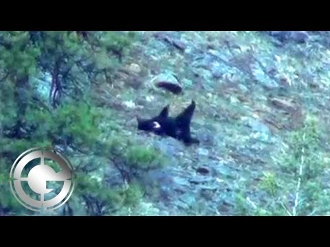 Black Bears at Big Angles in Idaho - Long Range Hunting