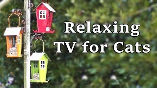 Relaxing TV for Cats : The Garden Bird Feeders
