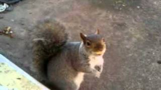 My Pet Garden Squirrel