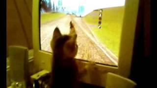 kot gra w GTA