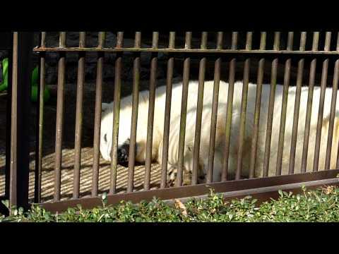 とべ動物園~ピース~