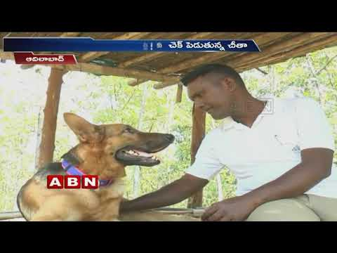 Forest Department uses Dog squad cheetah in Kavval forest | Adilabad | ABN Telugu