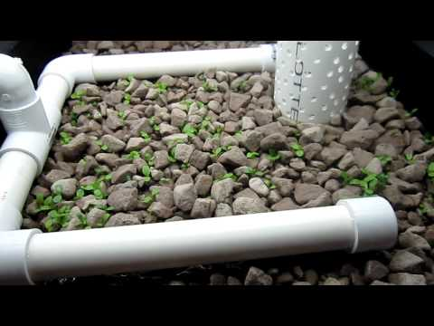 Affordable Vertical Indoor Aquaponics