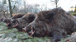 DOCUMENTAIRE CHASSE AU SANGLIER 10 - complet part 5 - Hunting made in italy wild boar