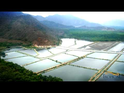 Sustainable Tilapia Farming, Tropical Aquaculture Products, Inc.