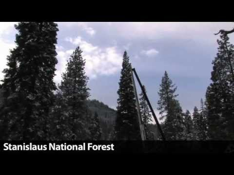 Tree begins journey from Stanislaus National Forest to nation's capital