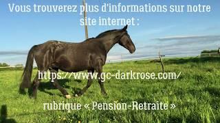 Pension Retraite Chevaux