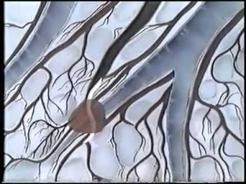 Учебный фильм по биологии в 7 классе Тип Круглые черви
