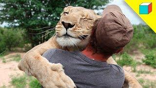 Top 10 Increíbles Animales Que Salvaron Vidas Humanas | TheRandomBox