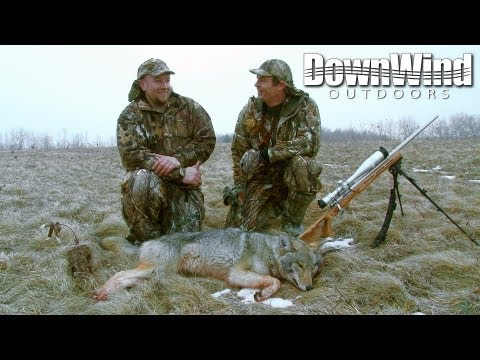 Eastern Coyote Hunting: Second Chance (DownWind Outdoors)