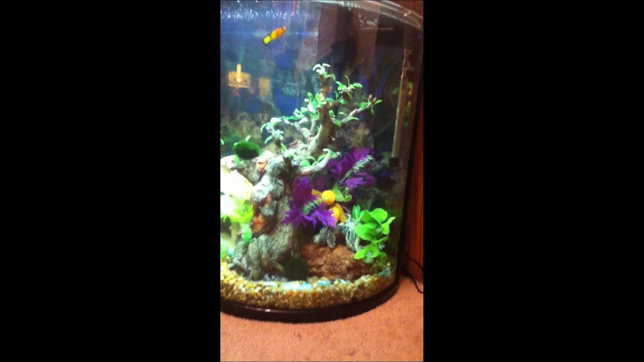 Tropical fish tank half moon 30 gallon youtube Thirty gallon fish tank