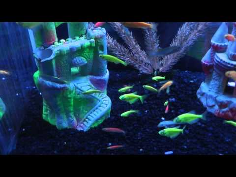On Location: The GloFish
