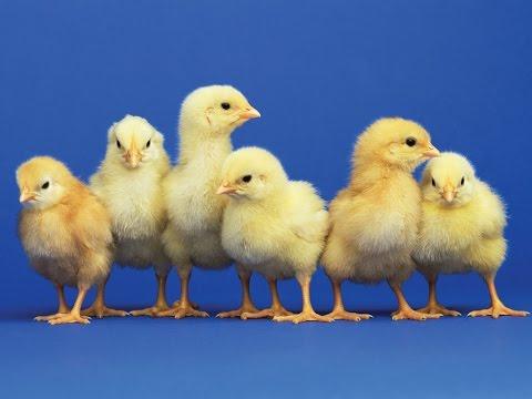 STILL Eating Animals CAVEMEN? VEGAN - HEART HEALTH Disease (Tips Recipe Love V-Day Date Poem Ideas