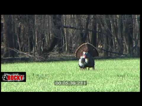 Turkey Hunting - Huge Longbeard goes down?? Video