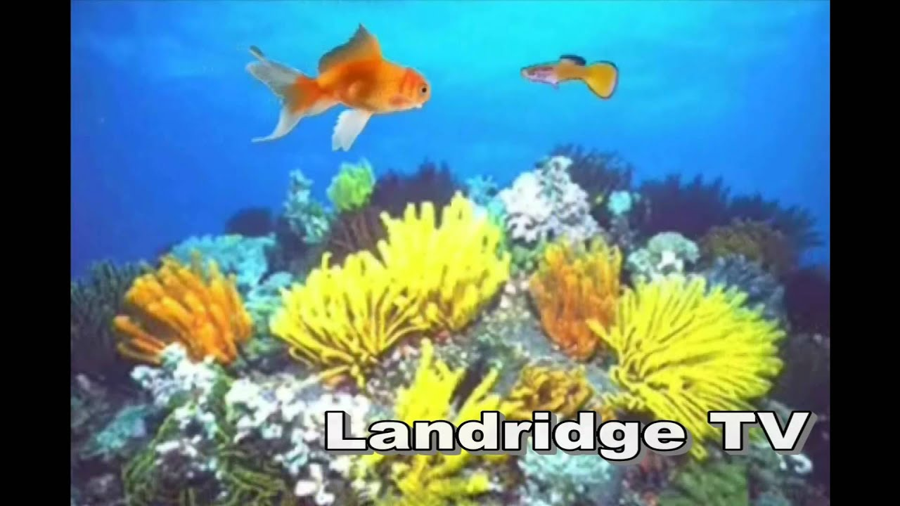 Fish tales 2 power short animated movie youtube for Fish cartoon movie