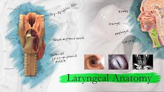 Introduction to Larynx, Pharynx, and Airway Anatomy