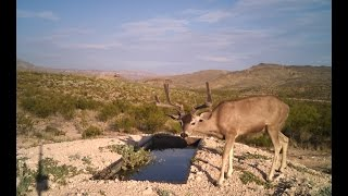 Animals on Camera, Water for Wildlife