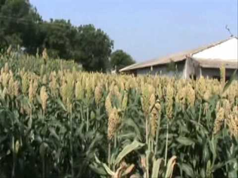 Farmer Choice.wmv