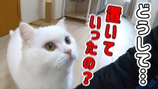1週間ぶりに飼い主と再会を果たした猫の反応がこちら!感動の再会に…なるはずだった!!!