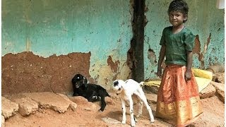 South India (Tamil Nadu and Kerala) Part 1: Tamil Nadu