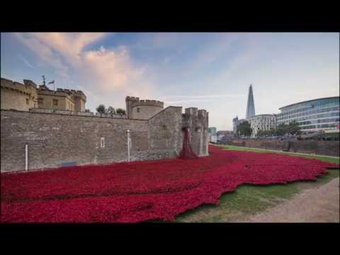 888246  Tower of London Poppies 4k