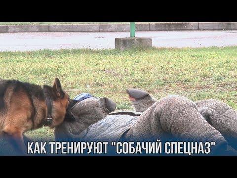 """Как тренируют """"собачий спецназ"""""""
