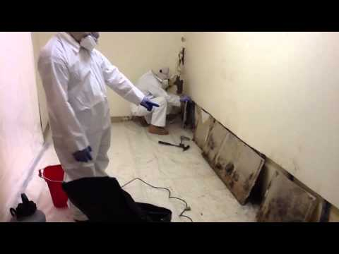 Black Mold Removal - Winston Salem, NC