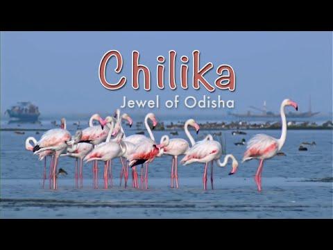 Chilika   Jewel Of Odisha HD