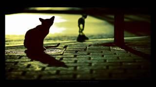 Download Lagu Bonobo - Kiara Gratis STAFABAND