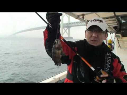 にんにく漬けサビキでメバル快釣!明石沖での船メバル釣り!