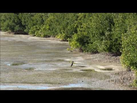 Honeymoon Island State Park, Dunedin, FL, USA: HD 1080p