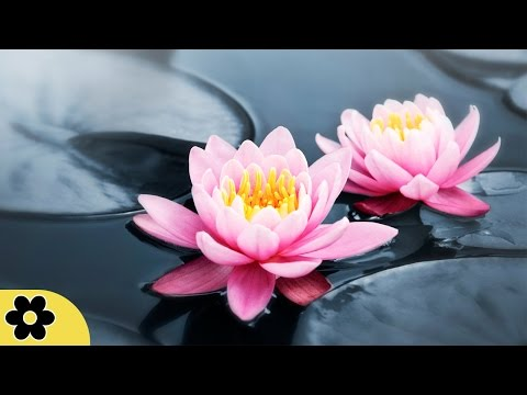 Zen Meditation Music, Soothing Music, Relaxing Music Meditation, Zen, Binaural Beats,  ✿2783C