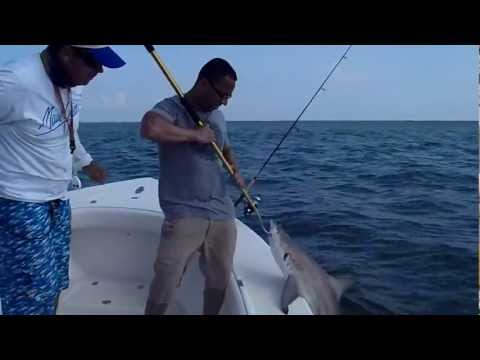 Tampa Bay Black Tip Shark Fishing with Captain David Beede 813-758-3406