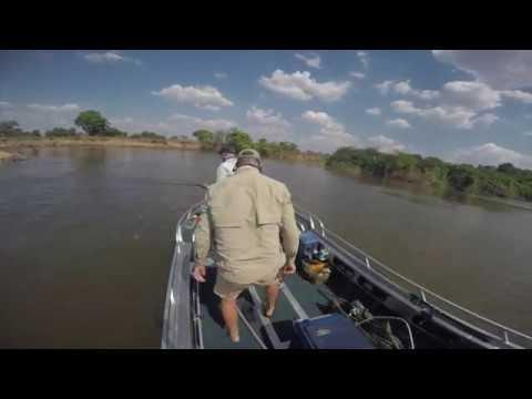 бегемот атакует лодку