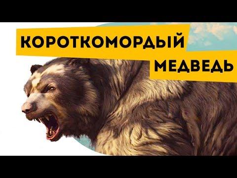 😮 Про вымерших животных   Гигантский короткомордый медведь   Наука для школьников   Семен Ученый