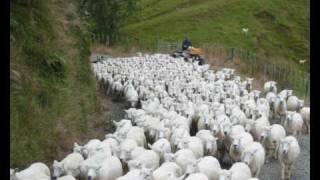Watch Brian Doerksen When You Shepherd Me video
