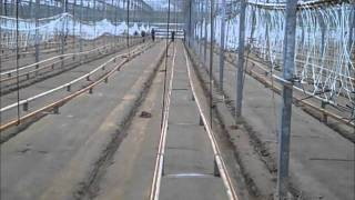 Growing Peppers: greenhouse cleaning