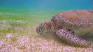 Tulum, Mexico Nature Documentary - cave diving, kite surfing, Mayan ruins, and more!.mov