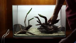 by the Forest Shore - ADA 60 cm Aquarium Step-by-Step