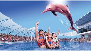 Pink Dolphin in Singapore