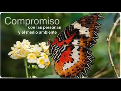 la contaminación ambiental.wmv
