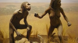 People Evolved From Apes